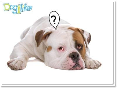 Dogilike.com :: การวางยาสลบสุนัข