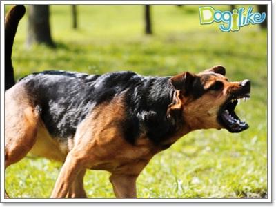 Dogilike.com :: เช็คความพร้อมก่อนรับมาเลี้ยง