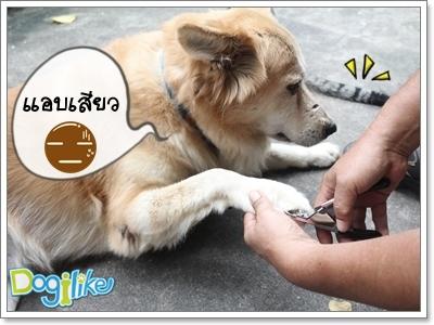 Dogilike.com :: REVIEW : ที่ตัดเล็บสุนัข