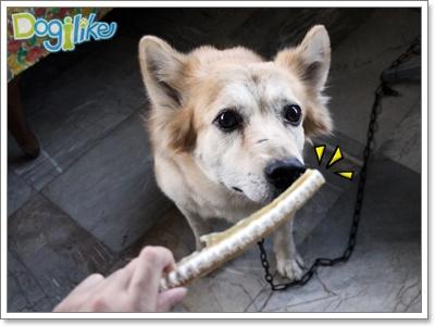 Dogilike.com :: REVIEW : ขนมกระดูกปลาฉลาม
