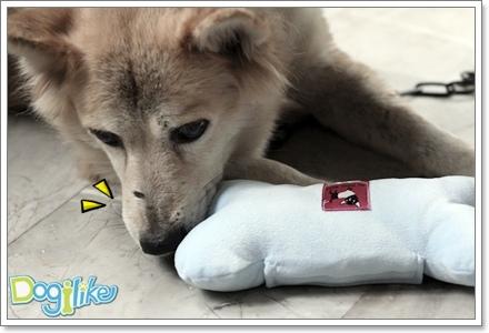 Dogilike.com :: REVIEW ╦┴═╣р┬ч╣ ICE BONE