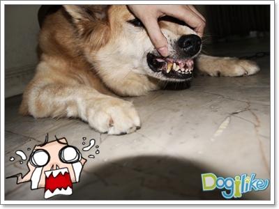 Dogilike.com :: REVIEW เดนทัล เฟรช ทำความสะอาดปากสุนัข