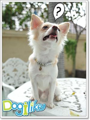 Dogilike.com :: ฝึกไม่ให้หมาร้องตามเรา