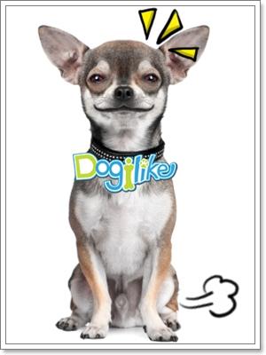 Dogilike.com :: ฝึกน้องหมาขับถ่าย