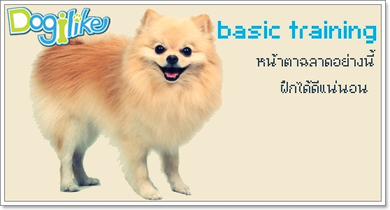 Dogilike.com :: การฝึก สำหรับมือใหม่หัดเลี้ยง