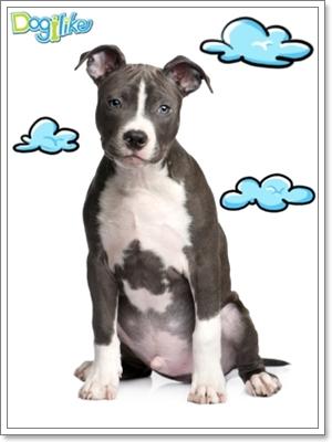 Dogilike.com :: ฝึกสุนัขให้อยู่นิ่ง