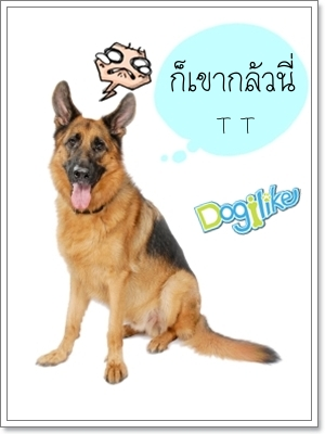 Dogilike.com :: การฝึกไม่ให้เห่ามั่ว!!