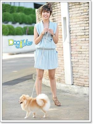 Dogilike.com :: ฝึกสุนัข เมื่อต้องย้ายที่เลี้ยง