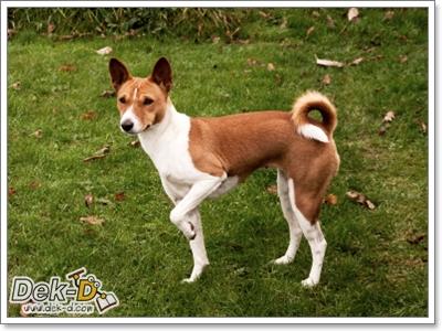 Dogilike.com :: ฝึกสุนัขไม่ให้วิ่งไล่คน