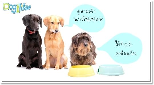 Dogilike.com :: ฝึกระเบียบการกิน