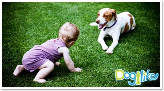 Dogilike.com :: ฝึกไม่ให้หมาก้าวร้าว