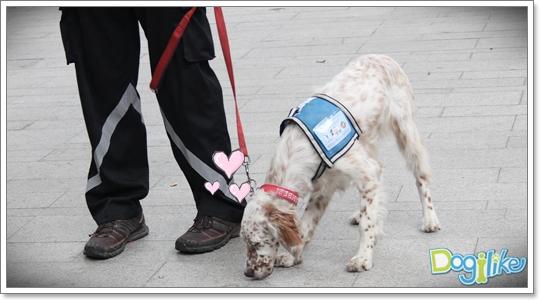 Dogilike.com :: ฝึกน้องหมาพาเดินเล่น