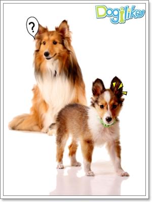 Dogilike.com :: �֡�١�عѢ��ͧ���� 2