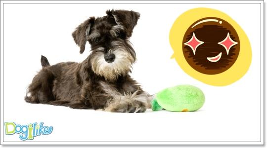 Dogilike.com :: ฝึกลูกสุนัขน้องใหม่