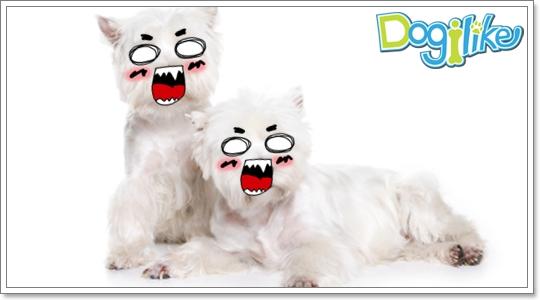 Dogilike.com :: ฝึกสุนัขที่ไม่ถูกกัน
