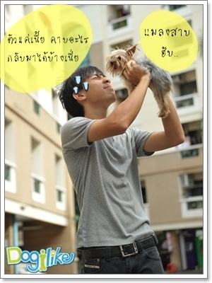 Dogilike.com :: ฝึกสุนัขคาบหนังสือพิมพ์