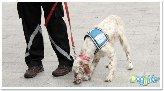 Dogilike.com :: ฝึกสุนัขหน้าใหม่