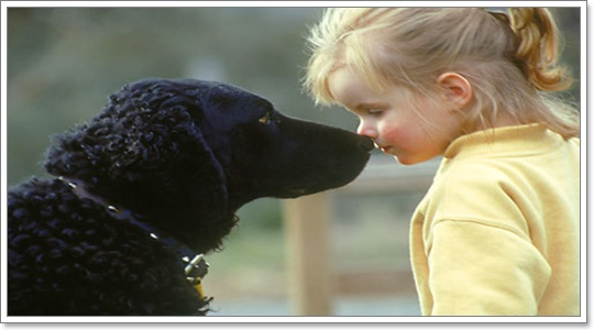 Dogilike.com :: สุนัขคิดอะไร เมื่อถูกทิ้งให้อยู่บ้าน?