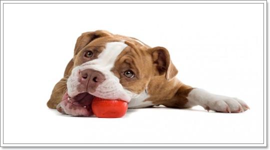 Dogilike.com :: ของเล่นสำหรับน้องหมา มีประโยชน์ยังไงบ้าง?