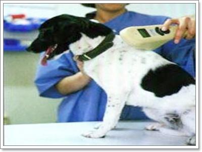 Dogilike.com :: Microchip ให้อะไรกับสุนัข