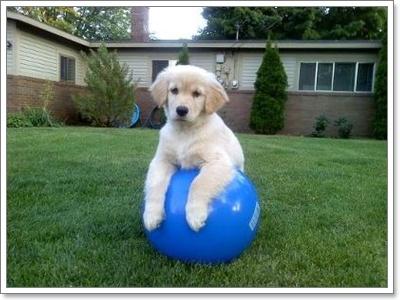 Dogilike.com :: เลี้ยงสุนัขในบ้าน เสี่ยงสุนัขขาเสีย..