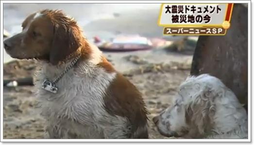 Dogilike.com :: \�عѢ\ ���������ҡ