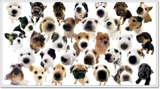 Dogilike.com :: สุนัข 2 สายพันธุ์ รักเจ้าของเป็นที่สุด!!