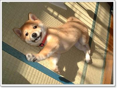 Dogilike.com :: 20 สายพันธุ์สุนัขกับเมืองหนาว 2