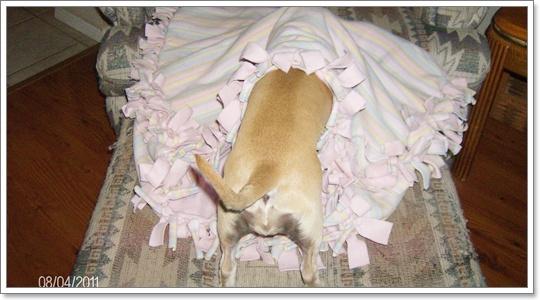 Dogilike.com :: ไขข้อข้องใจ ทำไมสุนัขถึงติดผ้า?