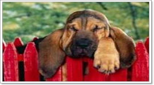 Dogilike.com :: รับมือกับน้องหมาโดนวางยาได้อย่างไร