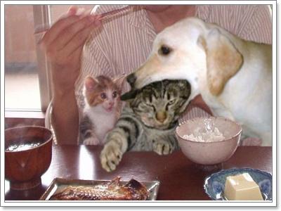 Dogilike.com :: 5 สิ่งสุนัข แตกต่างจากมนุษย์