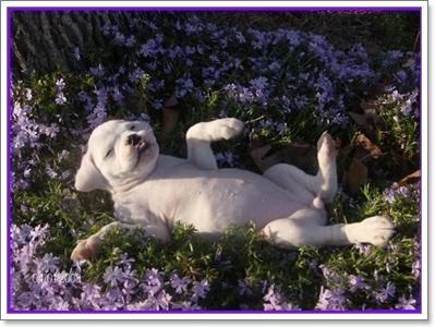 Dogilike.com :: ต้นไม้อันตรายต่อสุนัข ตอน 1