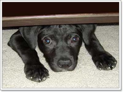 Dogilike.com :: เสียงพลุไฟ ปัญหาสำหรับสุนัขทุกเทศกาล