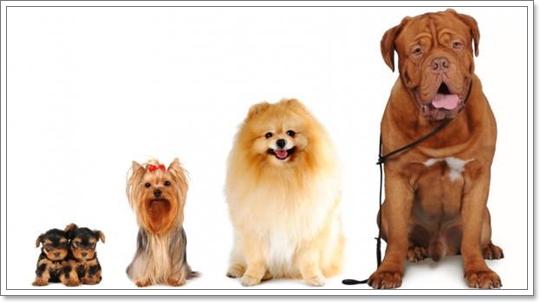 Dogilike.com :: ทำไมสุนัขขนร่วงมากในฤดูร้อน
