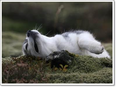 Dogilike.com :: ไขปริศนาทำไมน้องหมาชอบคลุกดิน - ของมีกลิ่นเหม็น