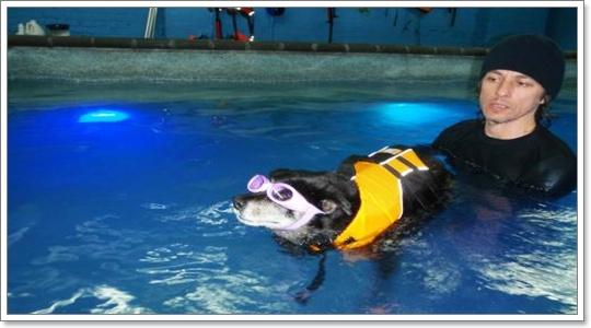 Dogilike.com :: สุนัขว่ายน้ำเป็นทุกตัวรึเปล่า?
