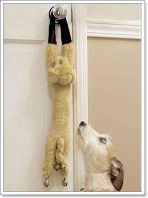 Dogilike.com :: ฝึกลูกหมาให้ขออนุญาตก่อนออกจากบ้าน