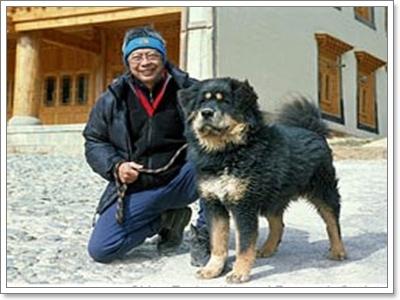 Dogilike.com :: น้องหมาพันธุ์ไหนแพงสุดในโลก