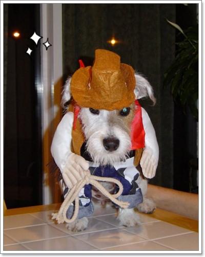Dogilike.com :: คาวบอย สุดเท่