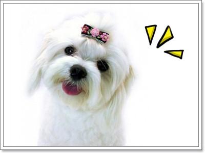 Dogilike.com :: กิ๊บติดผม อุ้ย!! ติดขนน้องหมา