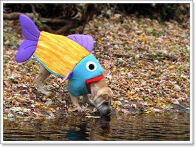 Dogilike.com :: เมื่อน้องหมาอยากเป็นน้องปลา