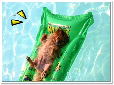 Dogilike.com :: เตรียมรับหน้าร้อนด้วย แพยางเป่าลมสำหรับน้องหมา