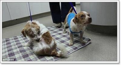 Dogilike.com :: สลด! ฝูงผึ้งแตกรังรุมต่อยลูกสุนัข เจ็บ 2 ตาย 3