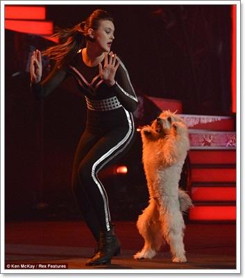 Dogilike.com :: น้องหมาเท้าไฟชนะเลิศเวที Britain Got Talent 2012