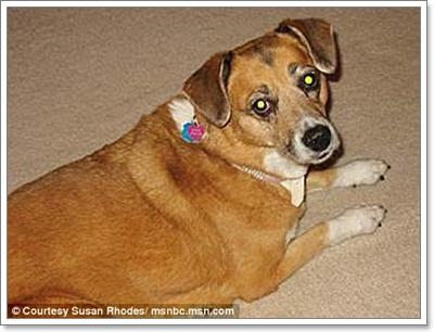 Dogilike.com :: สุนัขเมืองมะกันกินขนม 3 ยี่ห้อดังตายนับ 1,000 ตัว!!
