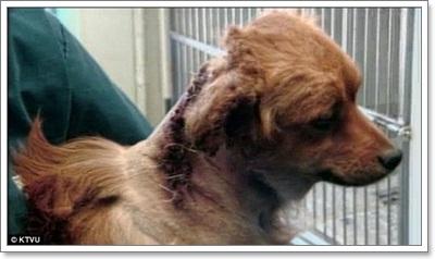 Dogilike.com :: พิเรนท์! วัยรุ่นมะกันติดประทัดระเบิดคอสุนัข