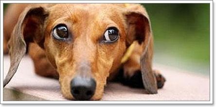 Dogilike.com :: พิษร้ายยาเบื่อหนู อาเจียนทั้งคนทั้งสุนัข