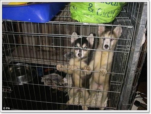 Dogilike.com :: รับโทษแล้ว! สองสามีภรรยาละเลยสัตว์เลี้ยง