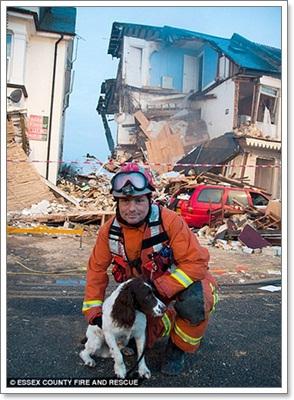 Dogilike.com :: น้องหมาฮีโร่! ดมกลิ่นหาผู้รอดชีวิตจากแก๊สระเบิด