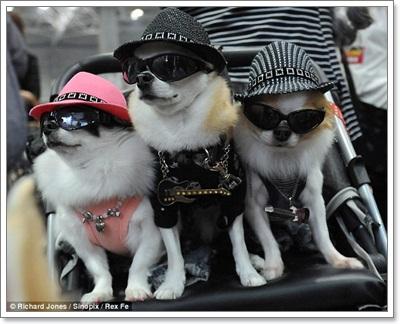 Dogilike.com :: เตรียมพร้อม! พาน้องหมาเดินงานแฟร์